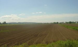 Сколько стоит гектар земли сельскохозяйственного назначения?